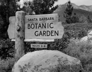 The Santa Barbara Botanic Garden